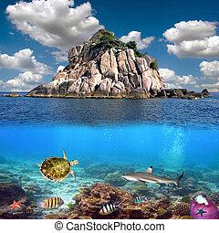 île, corail, baie, récif, thaïlande, requins, siam