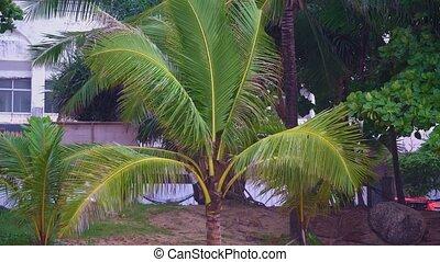 île tropicale, plage paume, arbre