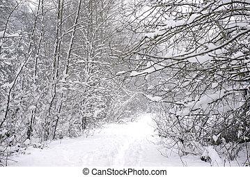 île, wintery, neige, vancouver, orage, sous, paysage