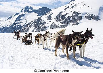 -, alaska, sledding, chien