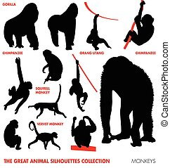 -, animal, collection, singes