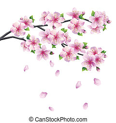 -, floraison, arbre, japonaise, sakura, branche, cerise