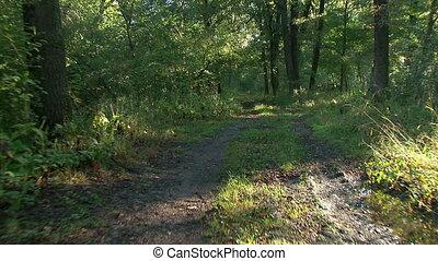 -, levers de soleil, coup, forêt, steadicam