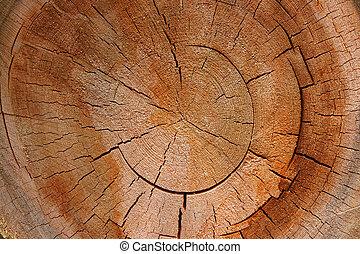 -, section, arbre, croix, anneau croissance, circulaire