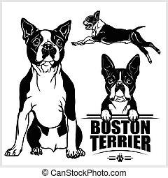 -, vecteur, isolé, fond blanc, terrier, chien, ensemble, boston, illustration