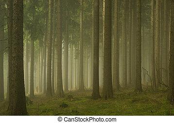 01, brouillard, forêt