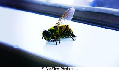 02, mort, abeille