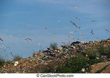 08, décharge ordures
