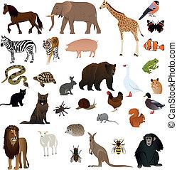 1, animaux