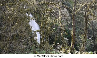 1, montagne, chute eau, cannelure rivière