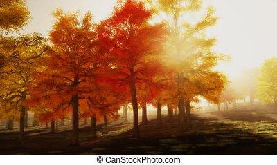 (1140), soleil, parc, arbres, automne, après-midi, boucle, rouges