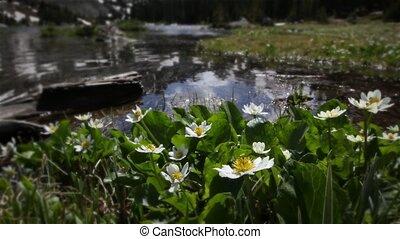 (1208), torrent, wildflowers