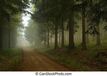 18, brouillard, forêt