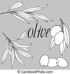 274, olive