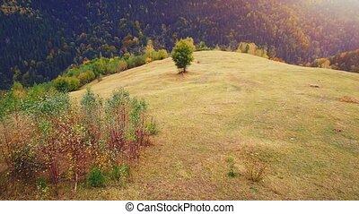 30fps, aérien, 4k, carpathian, vol, montagnes.