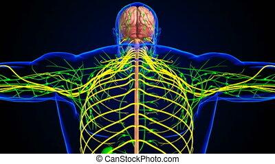 3d, anatomie, concept, cerveau, monde médical, humain