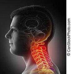 3d, medically, mâle, avoir, douloureux, précis, illustration, cou, rendu
