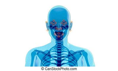 4k, anatomie, facial, concept, reconnaissance