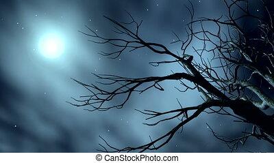 9-1, étoiles, nuit