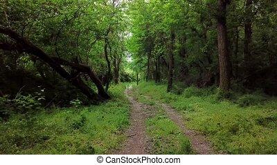 aérien, arbres, fantasme, en mouvement, forêt, entre