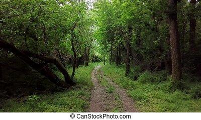 aérien, -, arbres, fantasme, en mouvement, forêt, entre, mystérieux, paysages