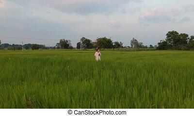 aérien, chercheur, jasmin, champ, riz, vue
