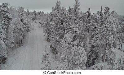 aérien, hiver, camp, forêt pin, vue