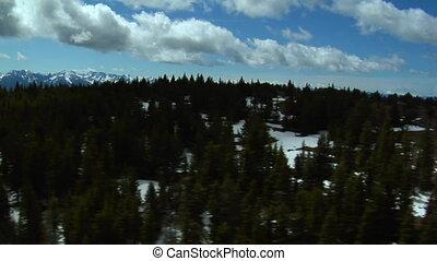 aérien, pin, montana, arbres, paradis, coup, vallée