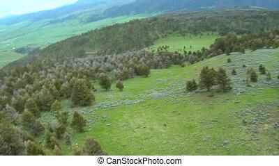 aérien, pré, paradis, montana, loups, vallée, herbeux