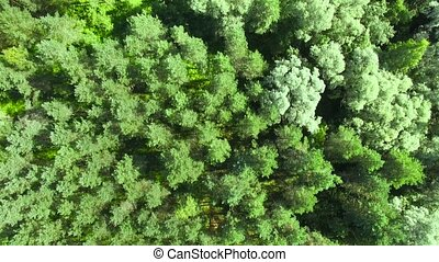 aérien, sommet, -, forest., hd, vue