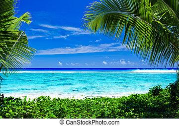 abandonné, arbres, encadré, exotique, plage paume