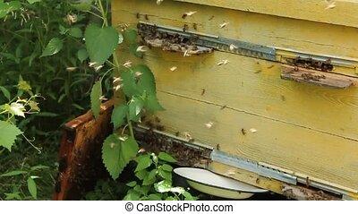 abeilles, soir, voler