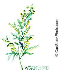 absinthe, commun, absinthium), (artemisia