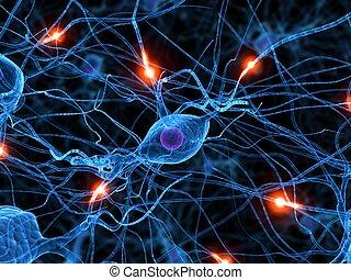 actif, nerf, cellule