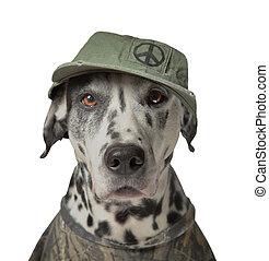 activiste, ou, droits animaux