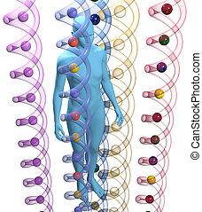 adn, science, personne, génétique, humain, 3d
