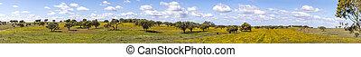 aerea, côte, champs, portugal, olive, coloré, paysage, bouchez arbres, arbres, ourique, algarve