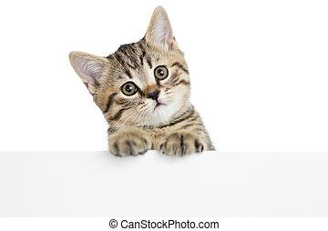 affiche, chaton, isolé, chat lire, fond, vide, blanc dehors