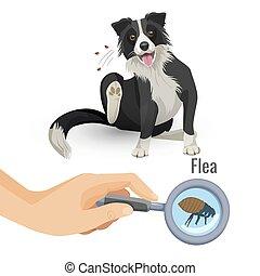affiche, chien, illustration, puce, insecte, vecteur, grattement