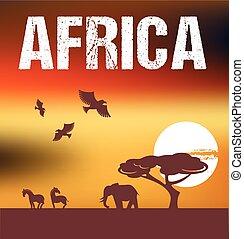 afrique, fond, infographics, -