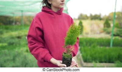 agriculture, tenue, thuja, local, femme, hands., botany., elle, vert, nature, scientifique, amour, jeune, environment., business, plant