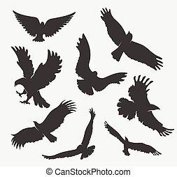 aigle, blanc, voler, silhouette, fond