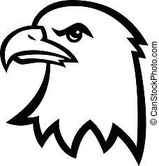 aigle, tête