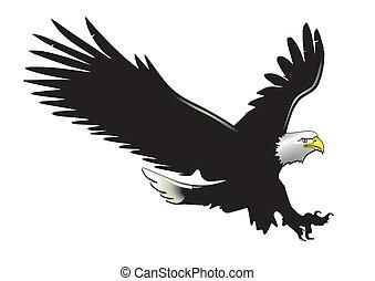 aigle, vol