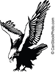 aigle, voler