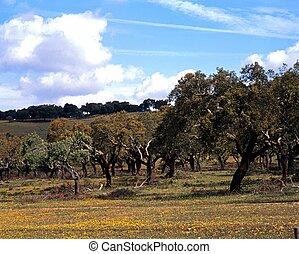 alentejo, arbres, chêne, portugal., bouchon