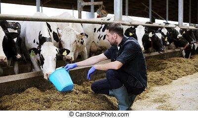 alimentation, ferme, étable, foin, laitage, vaches, homme