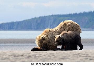 alimentation, grizzly, petit, mère, brides