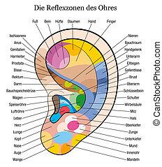 allemand, oreille, reflexology, description