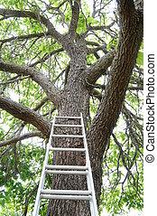 aller, échelle, haut, arbre